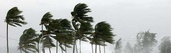 Wind on Palm Trees